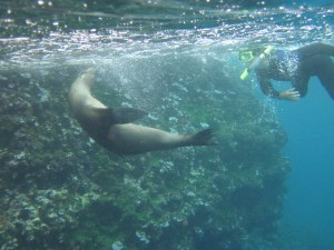 Cory frolics with a playful sea lion off Espanola Island in the Galapagos
